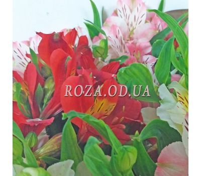 """19 alstromeries 3"" in the online flower shop roza.od.ua"