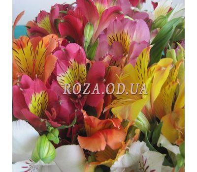 """29 alstromeries 1"" in the online flower shop roza.od.ua"