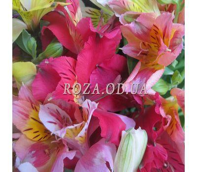 """29 alstromeries 2"" in the online flower shop roza.od.ua"