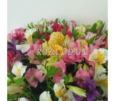 """51 Alstroemeria 1"" in the online flower shop roza.od.ua"
