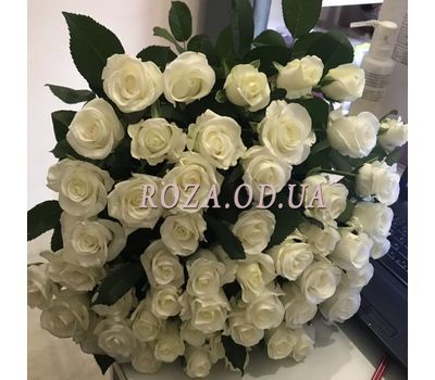 """""""51 white rose 60 cm - 1"""" in the online flower shop roza.od.ua"""