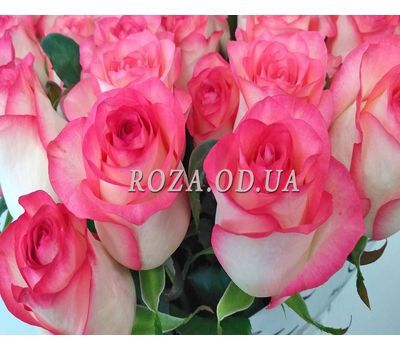 """51 roses Jumilia 1"" in the online flower shop roza.od.ua"