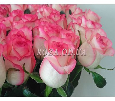 """51 roses Jumilia 3"" in the online flower shop roza.od.ua"