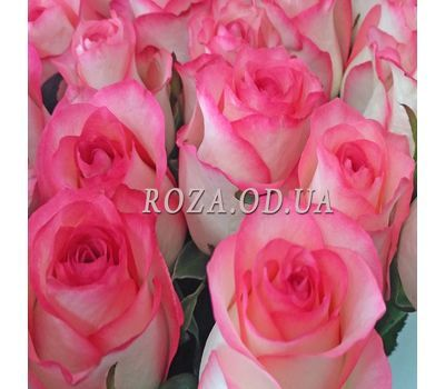 """51 roses Jumilia 4"" in the online flower shop roza.od.ua"