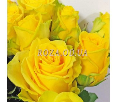 """9 yellow roses 1"" in the online flower shop roza.od.ua"