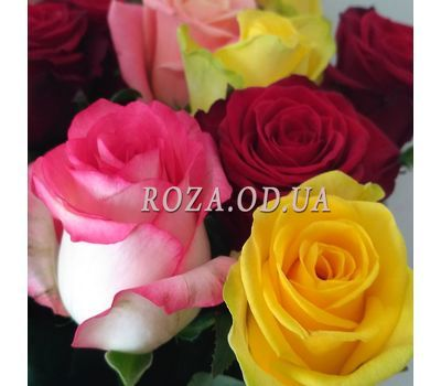 """15 multicolored roses 2"" in the online flower shop roza.od.ua"