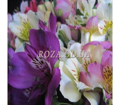 """Bouquet of 17 alstromeries 2"" in the online flower shop roza.od.ua"