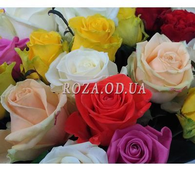 """23 roses 4"" in the online flower shop roza.od.ua"