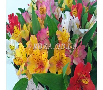 """Bouquet of 35 alstromeries 1"" in the online flower shop roza.od.ua"