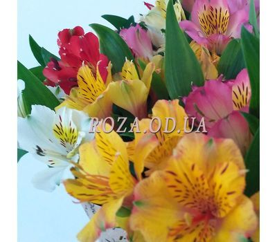 """Bouquet of 35 alstromeries 2"" in the online flower shop roza.od.ua"