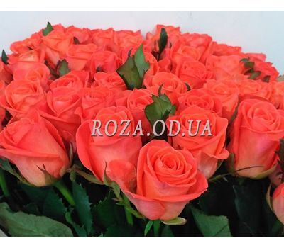 """35 roses 1"" in the online flower shop roza.od.ua"