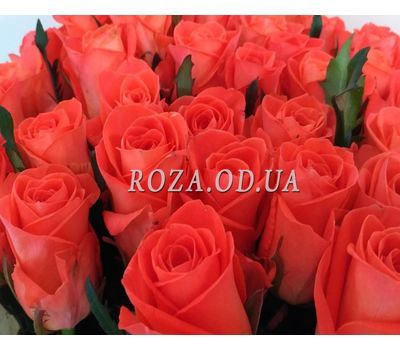 """35 roses 2"" in the online flower shop roza.od.ua"