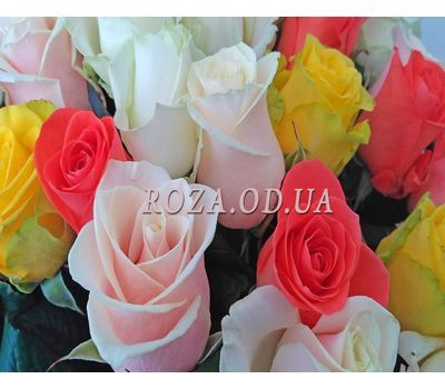 """37 multicolored roses 1"" in the online flower shop roza.od.ua"