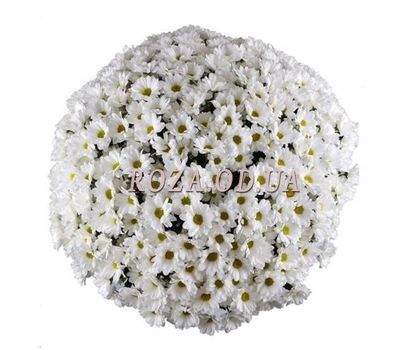 """51 Chamomile Chrysanthemum 1"" in the online flower shop roza.od.ua"