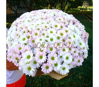 """51 Chamomile Chrysanthemum 2"" in the online flower shop roza.od.ua"