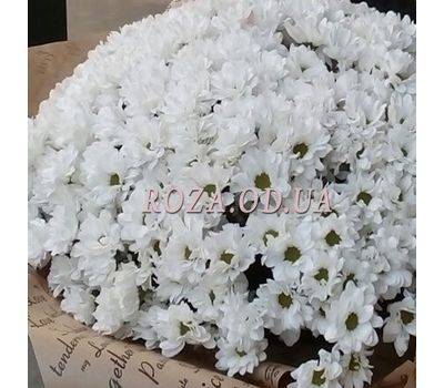 """51 Chamomile Chrysanthemum 3"" in the online flower shop roza.od.ua"