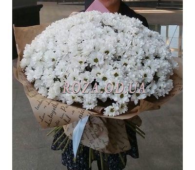 """51 Chamomile Chrysanthemum 4"" in the online flower shop roza.od.ua"