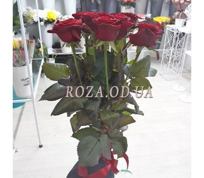 """11 red roses 70 cm 1"" in the online flower shop roza.od.ua"