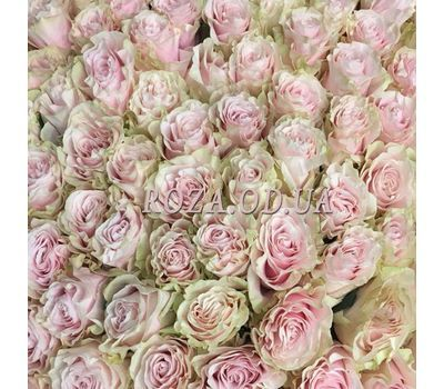 """""""31 rose Pink Mondial 1"""" in the online flower shop roza.od.ua"""