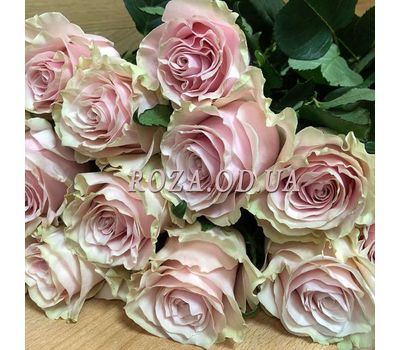 """""""31 rose Pink Mondial 2"""" in the online flower shop roza.od.ua"""