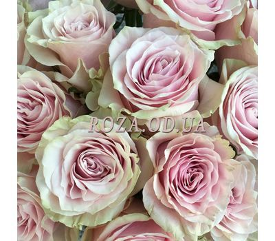 """""""31 rose Pink Mondial 3"""" in the online flower shop roza.od.ua"""