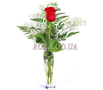 """1 rose with greens"" in the online flower shop roza.od.ua"