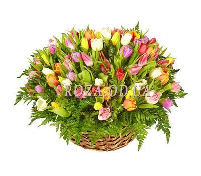"""201 tulip"" in the online flower shop roza.od.ua"