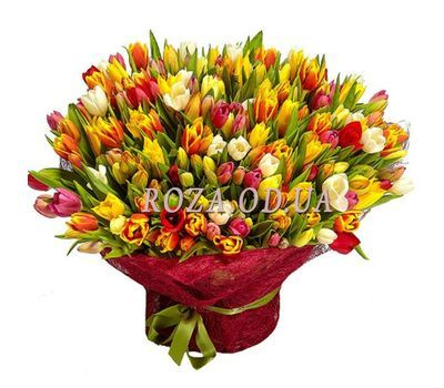 """301 tulip"" in the online flower shop roza.od.ua"