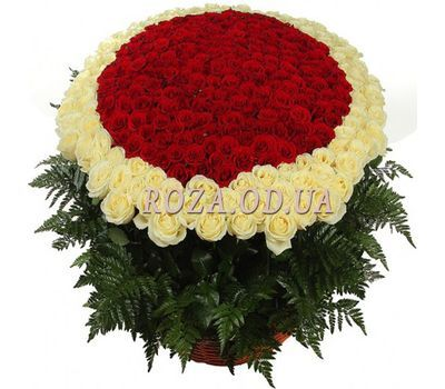 """501 roses in Odessa"" in the online flower shop roza.od.ua"