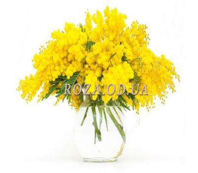 """""""9 branches of mimosa"""" in the online flower shop roza.od.ua"""