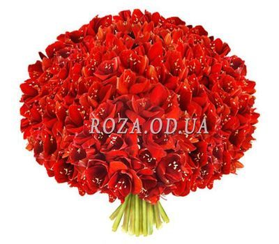 """Large bouquet of amaryllis"" in the online flower shop roza.od.ua"