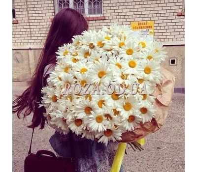 """Bouquet of 101 chamomiles"" in the online flower shop roza.od.ua"