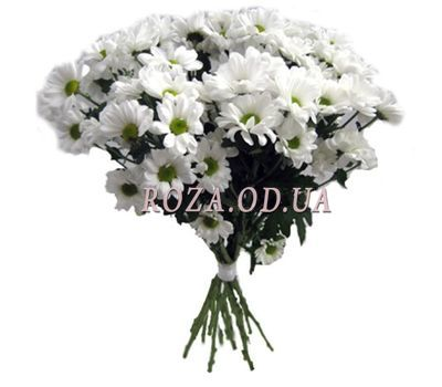 """Bouquet of 11 chamomiles"" in the online flower shop roza.od.ua"
