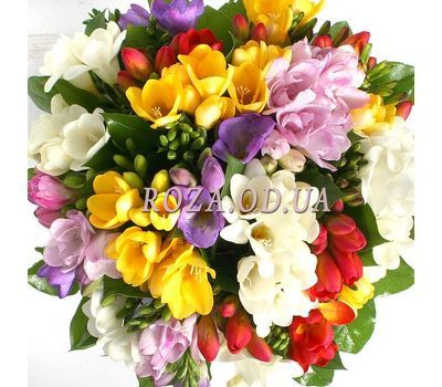 """""""Bouquet of 35 freesias"""" in the online flower shop roza.od.ua"""