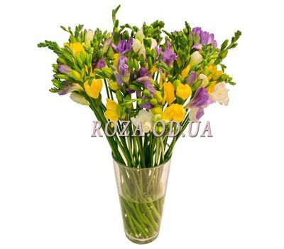 """Bouquet of 25 freesias"" in the online flower shop roza.od.ua"