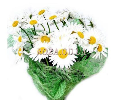 """Bouquet of 25 chamomiles"" in the online flower shop roza.od.ua"