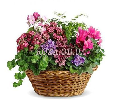 """Flower Paradise"" in the online flower shop roza.od.ua"