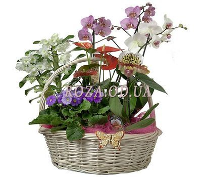 """Home garden"" in the online flower shop roza.od.ua"