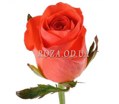 """Quantity you choose"" in the online flower shop roza.od.ua"