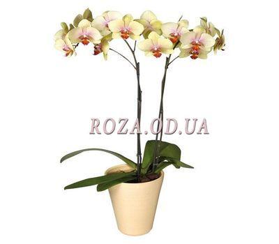 """""""Орхидея (2 ветки)"""" в интернет-магазине цветов roza.od.ua"""