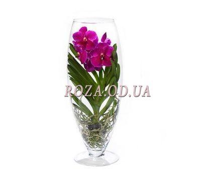 """Wanda Orchid"" in the online flower shop roza.od.ua"