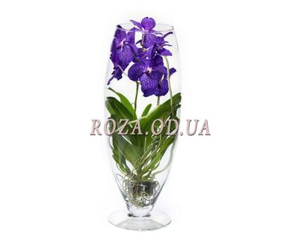 """Orohidea Wanda"" in the online flower shop roza.od.ua"