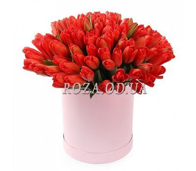 """51 tulips in a box"" in the online flower shop roza.od.ua"